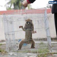 عروسک بازی با حیوانات!/باغ وحشهای خصوصی در برخی نقاط کشور