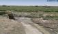 نگرانی وزارت بهداشت از ورود فاضلاب به مزارع ذرت، گندم و جو