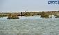 رهاسازی ۲۰ میلیون مترمکعب آب به تالاب هامون/تامین حقآبه هامون ریزگرد های محلی را محو می کند؟