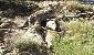 منطقهای شکار ممنوع در بهبهان که هنوز پاسگاه محیطبانی ندارد