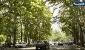 دود و گوگرد،درختان خیابان ولیعصر را پوک و خشک کرده است
