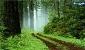 یکی به نعل و یکی به میخ طرح تنفس جنگل!