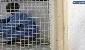 مرگ مرد معتاد در کمپی که «شکنجهگاه» بود